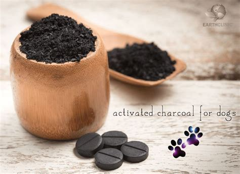 activated charcoal for dogs best 20 activated charcoal teeth ideas on charcoal for teeth whitening