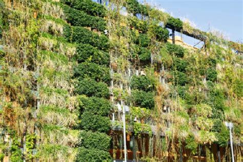pannelli per giardini verticali piante per giardini verticali il giardino e orto