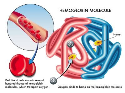 Color Of Oxygenated Blood by Blood Cells Types Of Blood Cells Biology Tutorvista Com
