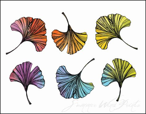 ginkgo leaf coloring page ginko biloba leaf drawing ginkgo leaf coloring page