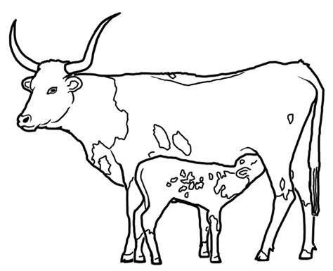 Texas Bull Coloring Page Coloring Pages Longhorns Coloring Pages