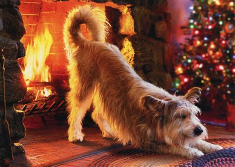 Fireplace Dogs by Warms At Fireplace Humorous