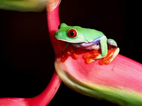 wallpaper apple frog 1024x768 green little frog desktop pc and mac wallpaper
