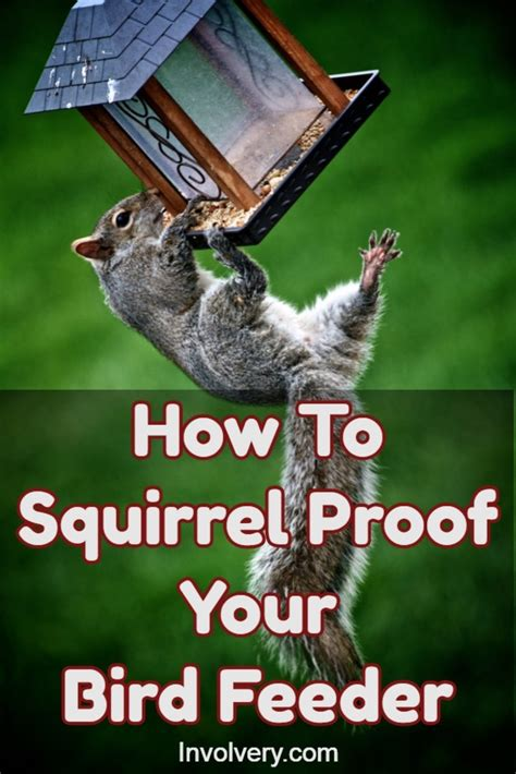squirrel proof bird feeders effortless streamline