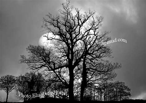 imagenes artisticas en blanco y negro tema paisajes naturaleza fotografia artistica