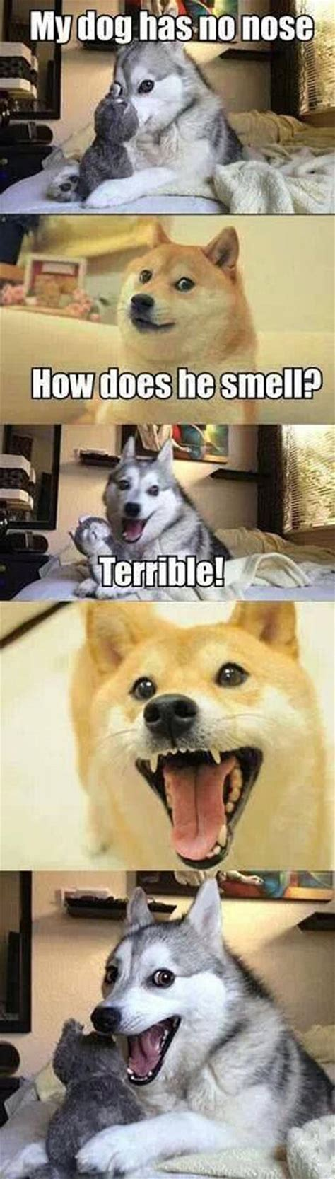puppy jokes husky meme joke