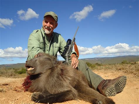 hunting chacma baboon south africa