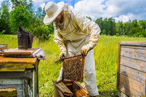 Bee Keeping By The Times Bee Keeper Beekeepers What Does It Take To Be Successful Bee Well