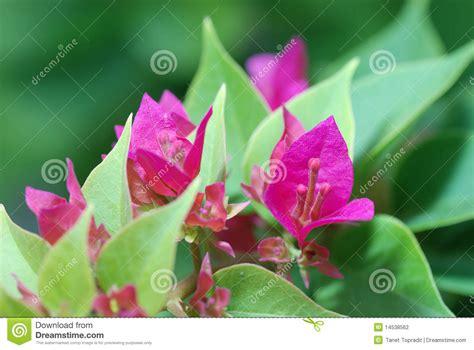 Paper Flower Garden Paper Flower In My Garden Stock Photo Image Of Floral 14538562