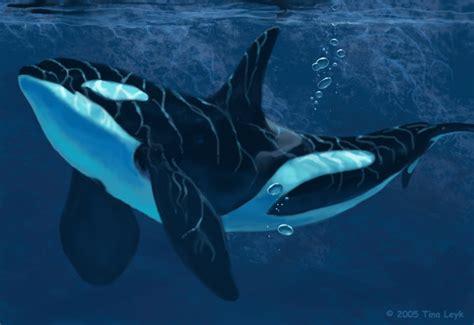 robot killer whale orca reflections by jaxxblackfox on deviantart
