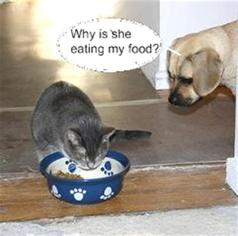 why does my dog act hungry all the time cesar s way can dogs eat cat food on a regular basis cats kittens