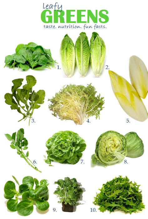 Healthiest Salad Greens: The Ultimate Guide   Live in the Now