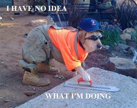 I Have No Idea What Im Doing Meme - i have no idea what i m doing meme 20 pics picture