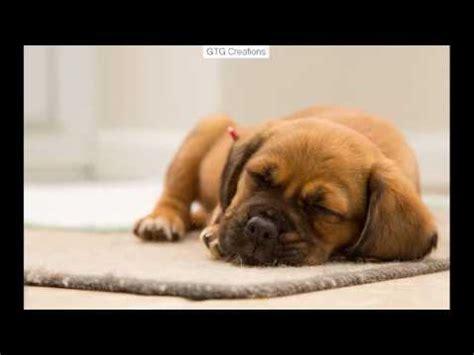 puppy stool remedy stool remedies