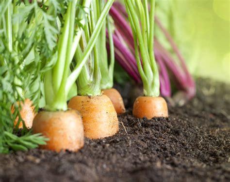coltivare ortaggi in vaso gli ortaggi pi 249 facili da coltivare in vaso