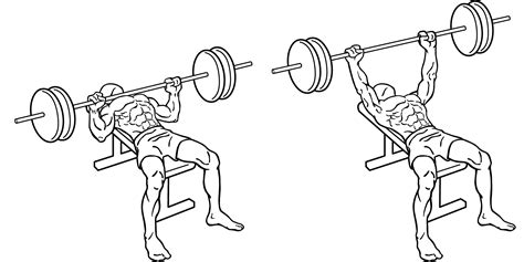 bench press person bench press