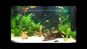 aquarium d eau douce fish tank 180l aquarium d eau