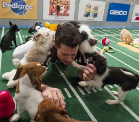 puppy bowl referee puppy bowl ix 2013 puppy bowl referee talks benefits of adoption huffpost