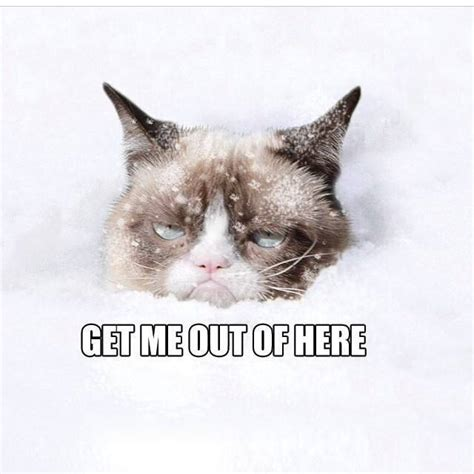Grumpy Cat Snow Meme - snow no grumpy cat picture