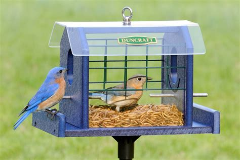 mealworm feeders for birds honemade product bluebird