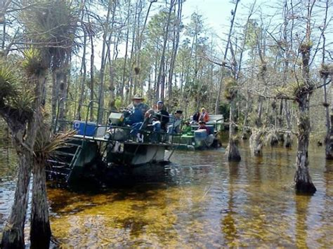 airboat tours marco island marco island marriott resort spa