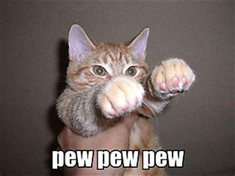 Cat Fight Meme - the auto marketing blog the kitten meme s influence on