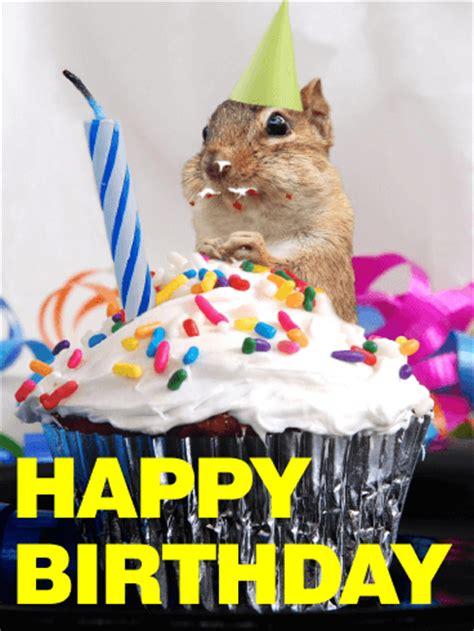 glutton squirrel animal birthday card birthday