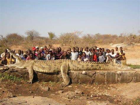 the biggest crocodile in the world