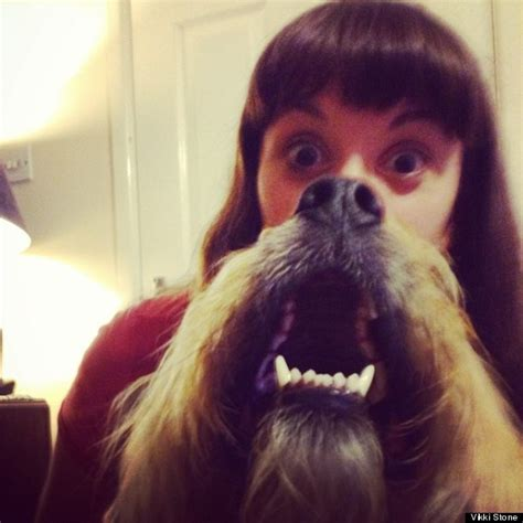 dogs with beards beards pet owners fight the cat beard trend pictures