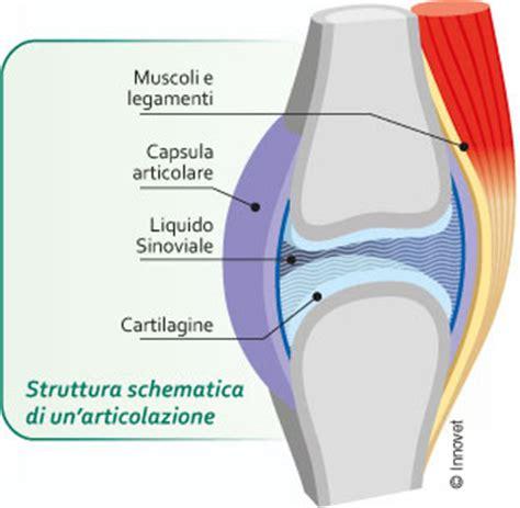 articolazione mobile le articolazioni organi di movimento innovet