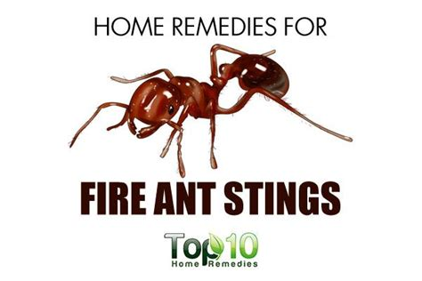 home remedies for ant stings page 2 of 3 top 10