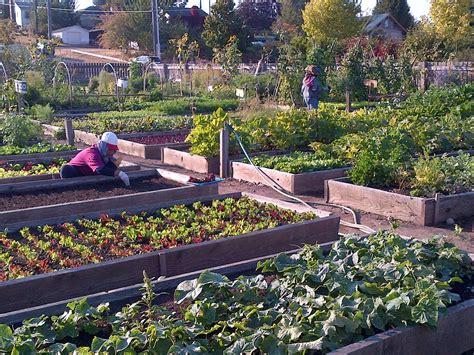 Gardening Seattle Seattle Setting Exle For Community Gardens Nationwide