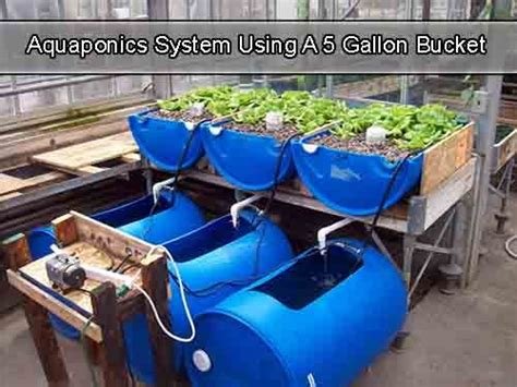 Aquaponic Starter Kit Malaysia 17 best ideas about 5 gallon buckets on solar