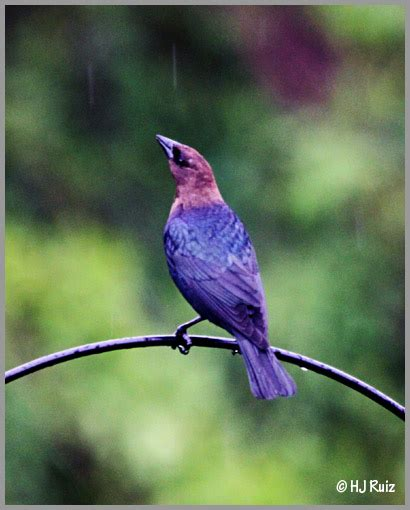 are birds color blind color blind birds avian101