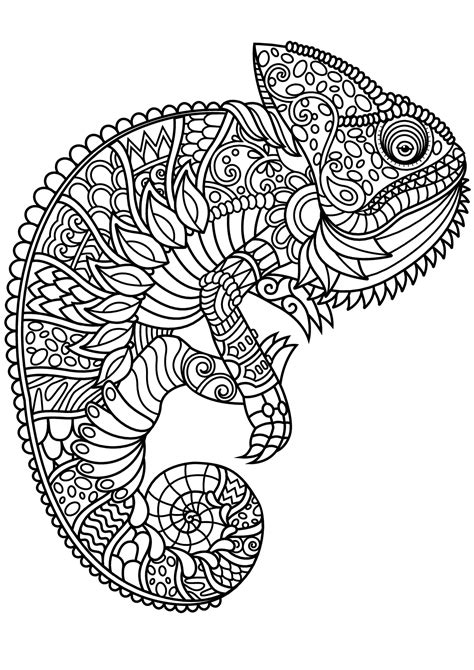 coloring pages for adults chameleon free book chameleon chameleons and lizards coloring
