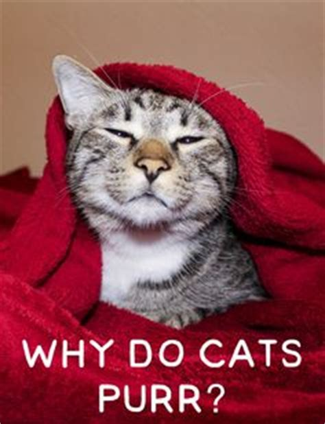 6 common signs that your pet is in pain pet health tips pinterest