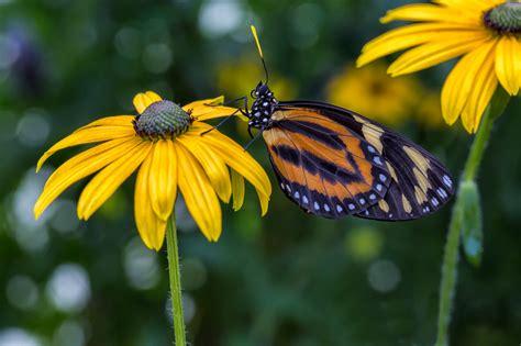 butterfly garden chicago