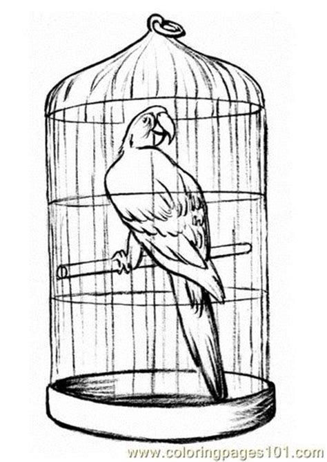 coloring pages of bird cages free coloring pages of birds in a cage