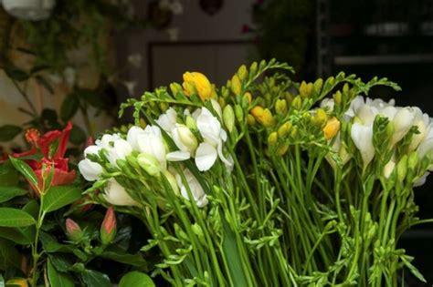 fiori di italia italia immagini e foto fiori di tutta l italia