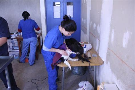 test d ingresso medicina veterinaria test veterinaria 2013