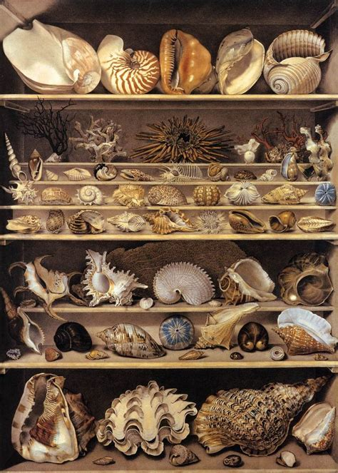 Cabinet De Curiosité Obscura by 25 Best Ideas About Cabinet Of Curiosities On