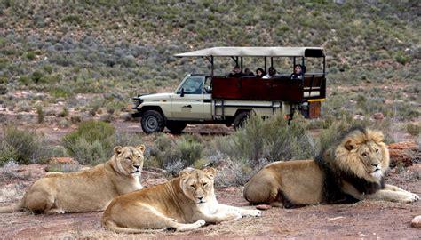 Aqilla Cape big 5 safaris in the cape with aquila reserve travelground