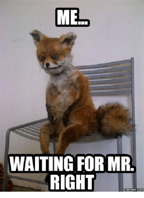 waiting    memes    meme  sizzle
