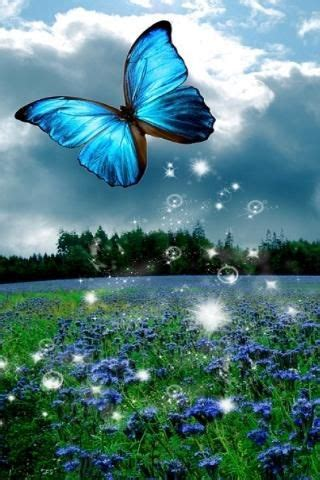 butterfly wallpaper   butterfly