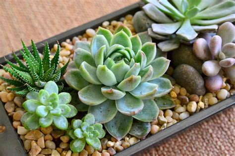 succulent arrangement ideas handcrafted succulent