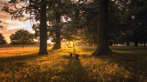wallpaper forest trees grass bench dawn sunrise