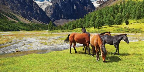 Ranch Homes For Sale horse property for sale horse farms amp horse ranches