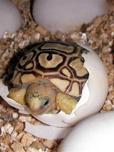 imagenes de animales que nacen del huevo nuestro bosque encantado animales vertebrados