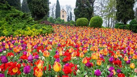 tulipanomania 2017 al parco giardino sigurt 224