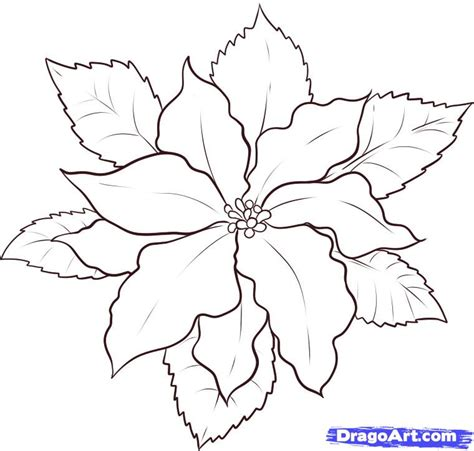 poinsettia leaves coloring pages poinsettia leaves outline www pixshark com images